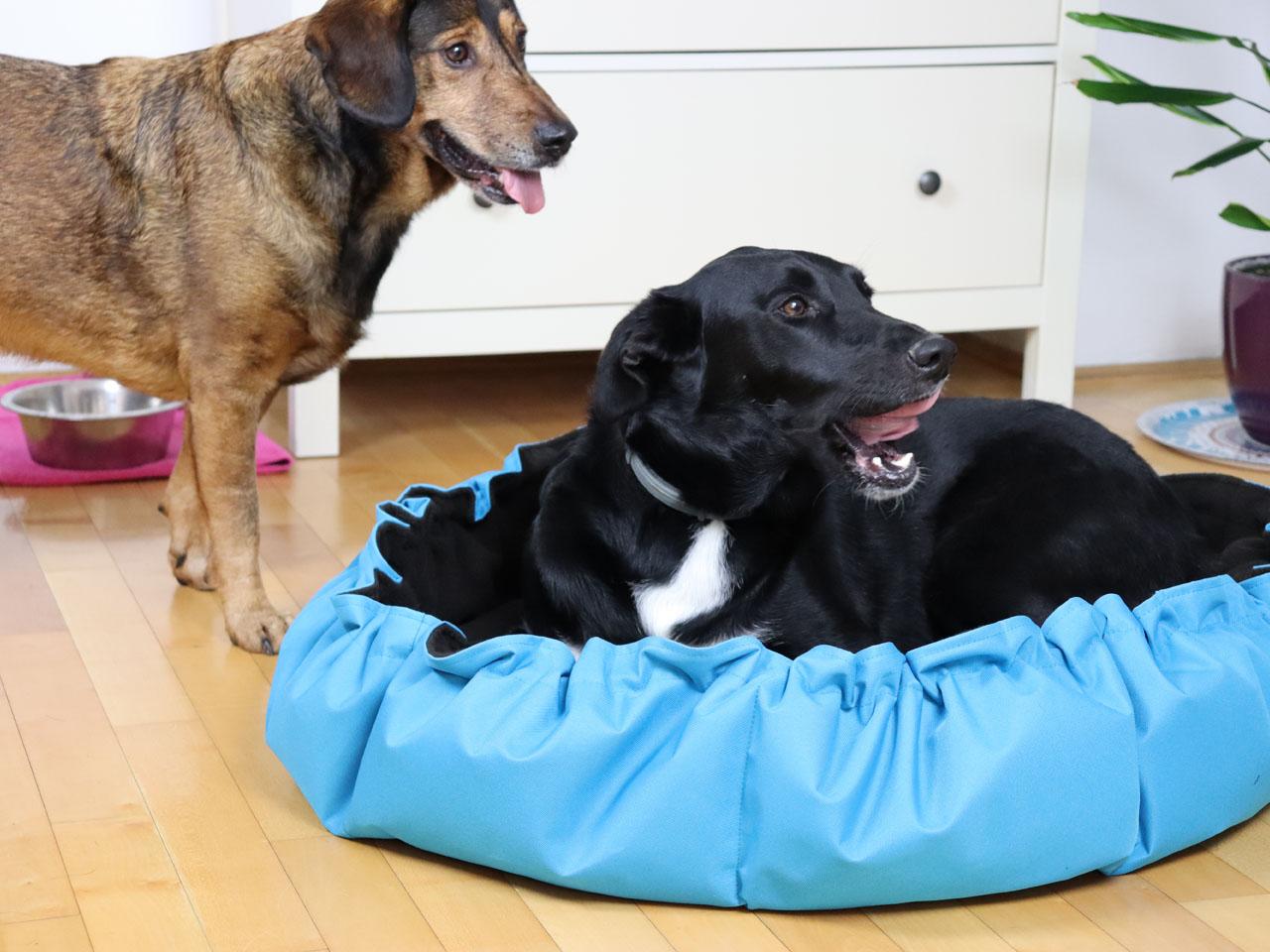 pas u gnijezdo jastuku