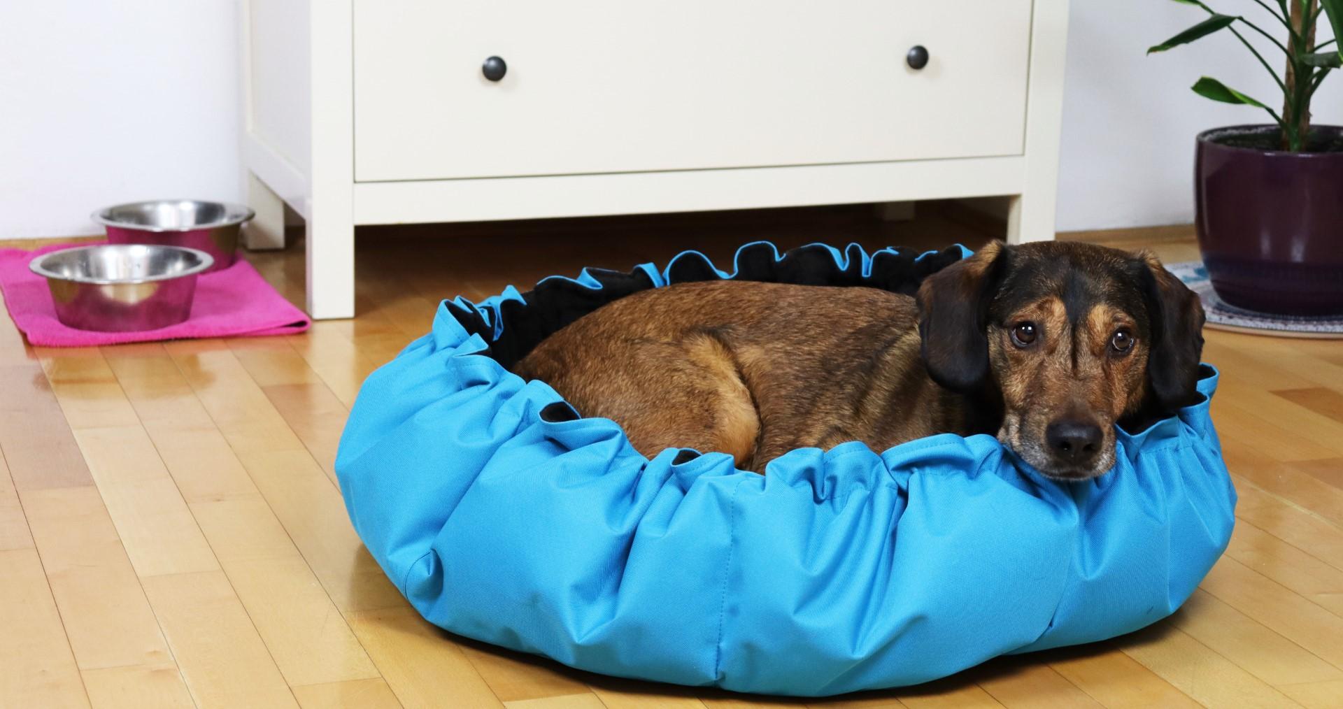 blog Plašljivi pas moj brat Roki foto