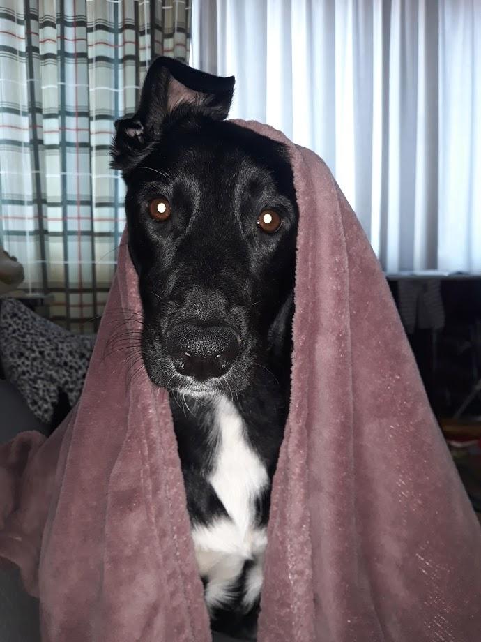 blog Život sa psima zna biti težak foto