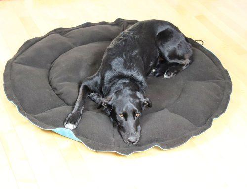 Najbolji krevet za psa nakon sportskih aktivnosti na otvorenom