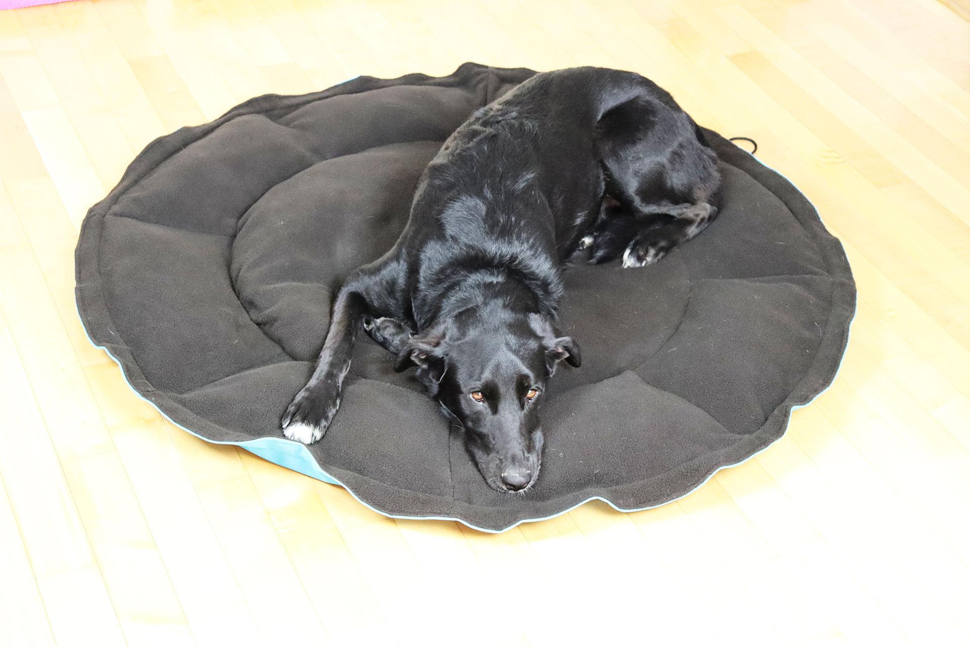 gnijezdo jastuk za psa